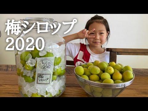 梅シロップ 2020 仕込み